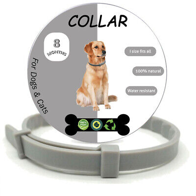 """23"""" Flea and Tick for Dogs Collar 8 Month Protection -Gray"""