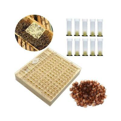 Queen Rearing Cupkit System Bee Beekeeping Catcher Kit Cups Box /& 100 Cell N7Q3