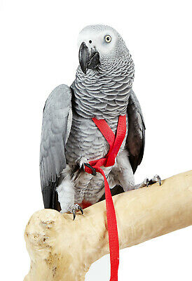 *New* Adventure Bound Pet Parrot Bird Parakeet Harness 6 Sizes African Grey Etc