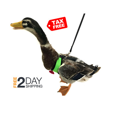 Yesito Chicken Harness Hen Duck Size with 6-Foot Matching Belt Comfortable Br...