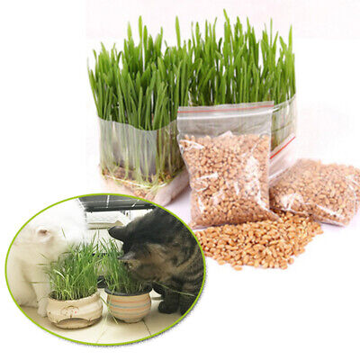 150g Organic Oat Grass Seeds Pets Cats Dogs Sweet Sprouting Juicing Wheat Grass