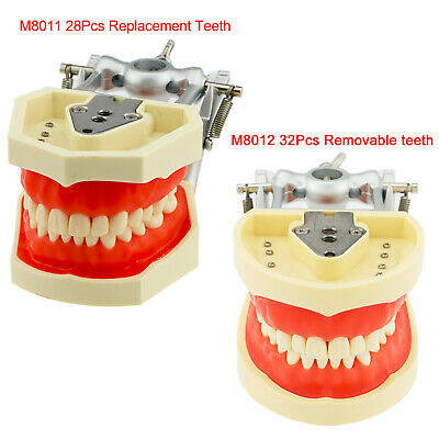 Kilgore Nissin 200 Type Dental Model Typodont 28 - 32pcs Removable Teeth Model
