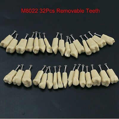 Dental Replacement Typodont Model 32pc Teeth Upper Lower Compatible Frasaco