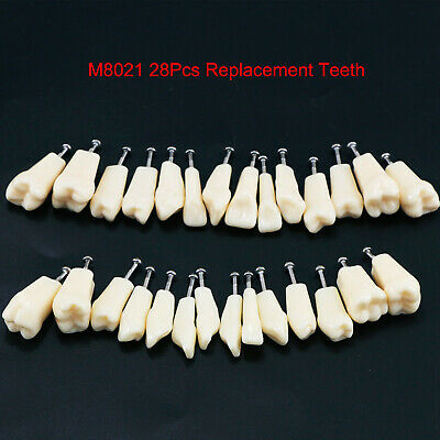 Dental Replacement Typodont Model Teeth  28pc Upper Lower Fit Frasaco AG3