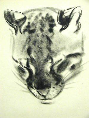 Newberry 1940 PORTRAIT OF A STRIPED CAT Print Matted