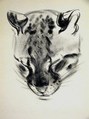 Clare Turlay Newberry POUNCE - SLEEPING OCELOT c1940 CAT Large Print Matted