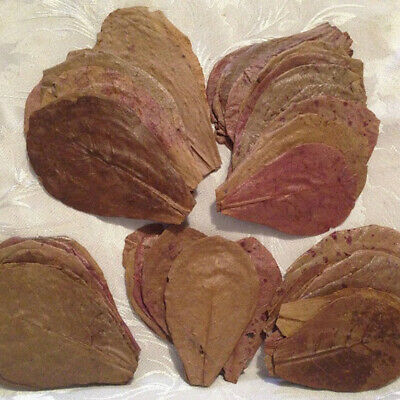 Almond Leaves A+ Grade Sun Dried Oranic Catappa Ketapang Naturally Aged & Dried