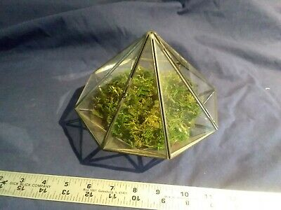 Clear Glass Tabletop Geometric Terrarium Box Decor Succulent Fern Planter Holder