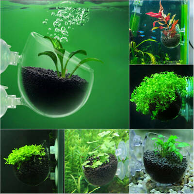 Grasses Moss Aquarium Tank Aquatic Plants Landscape Cup Cultivation Basin