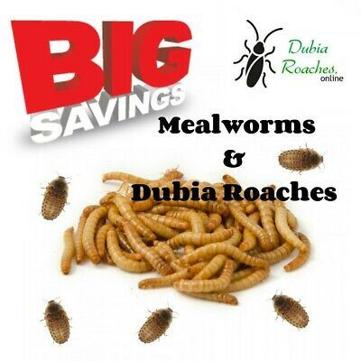 Live Mealworm & Dubia Roache combo pack 100 mealworms & 100 small dubia roaches