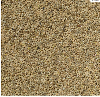 MALTBYS' STORES 1904 LTD 2kg 50/50 MIXED BUDGIE SEED AVIARY BIRD FOOD