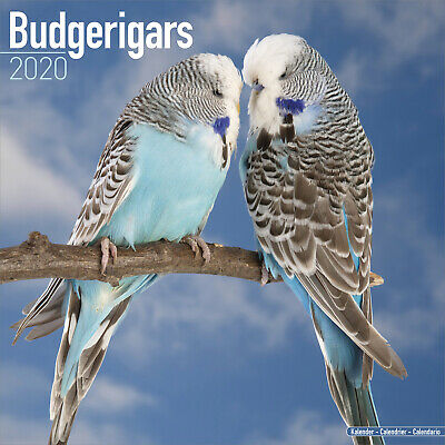 Budgerigar 2020 Bird Calendar 15% OFF MULTI ORDERS
