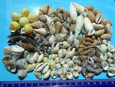 28 hermit crab shells mixed sizes and openings