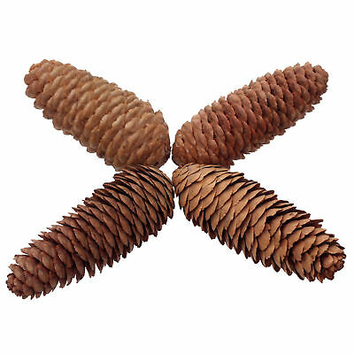 6 x Natural Large Long Pine Cones for Craft & Decoration