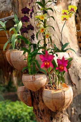 Natural Orchid Tropical Plant Hanger Making Natural Coconut Shell Husk 1 pc