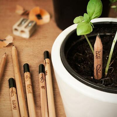 8 Pieces Eco Sprouting Bud Sprout Pencil Planting Herb Basil Mint Lucky Grass