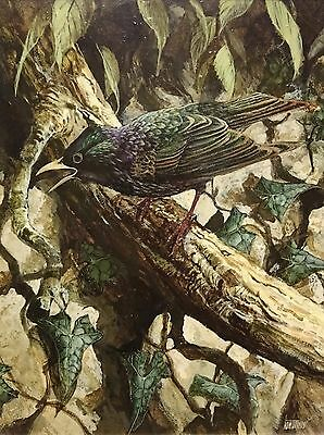 Ken TURNER original Ornithological oil painting of a bird starling and ivy