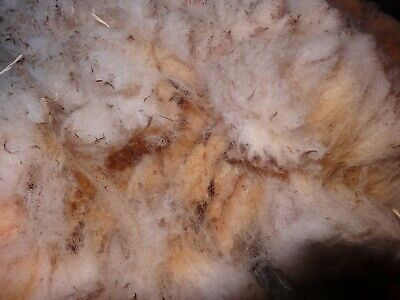 Hampshire down x Texel sheep fleece 2kg soft and beige