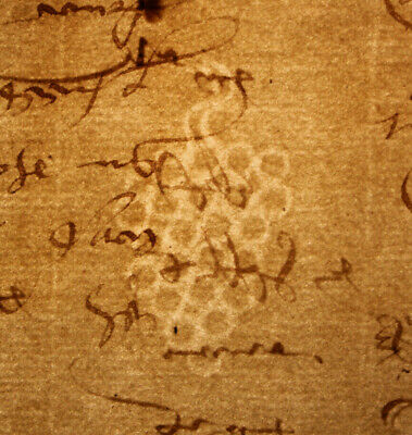 1520 Large medieval manuscript handwritten watermark lord land farm Oncial GRAPE