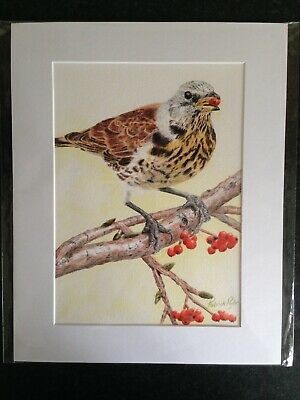 Limited Edition Mounted Print In Giclée Process Of Song Thrush In Oil Pencil