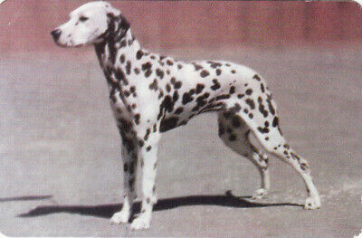 1 Swap Playing Collector Litho Card Dog Dalmatian  Info On Back #21