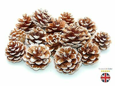 250g -  Frosted Natural Pine Cones 5cm - 8cm UK SELLER Premium Quality Xmas