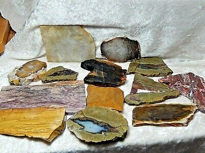 Lot of 13 Small Slabs Picture Jasper, Agates and Petrified Wood 1 Lb. 5 Oz.