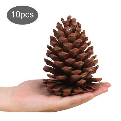 10x Christmas Pine Cones 12-15cm Natural Pinecone Baubles Xmas Tree Party Decors