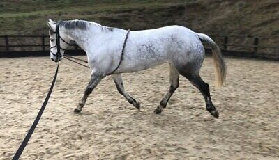 White Horse Equestrian Schooling Aid Pony Cob Full Lunge Roller Training System
