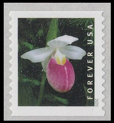 US Wild Orchids Cypripedium reginae forever coil single MNH 2020