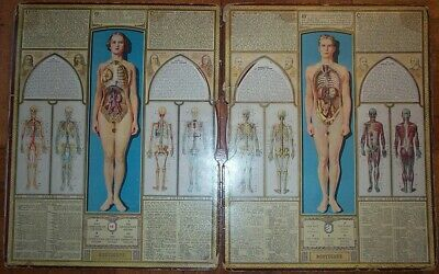 Antique Anatomy Movable Wheels Bodyscope Vintage Charts ~ Male & Female Segal