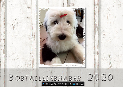 Bobtail Kalender 2020 - Old English Sheepdog (OES) OVP