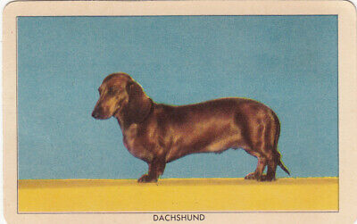 1 Swap Playing Collector Litho Challenge Of The Yukon Dog Card - Dachshund