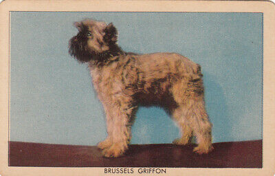 1 Swap Playing Collector Litho Challenge Of The Yukon Dog Card -Brussels Griffon