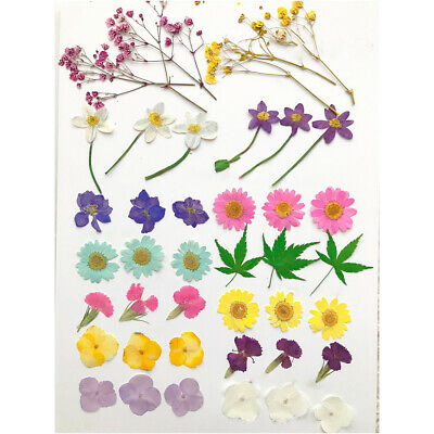 Multiple Pressed Natural Dried Flower Embellishment Floral Decor Nice #CF7XX