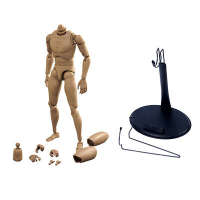 1/6 Scale Action Figure of Narrow Shoulder Naked Male w/ Body Holder Stand DIY