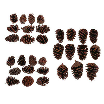 30Pcs Large Natural Dried Pine Cones Crafts For Home Wedding Party Decor