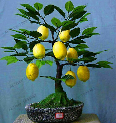 Lemon Tree Fruit Seeds Plants Bonsai Diy Garden Edible Home As Green 20pcs