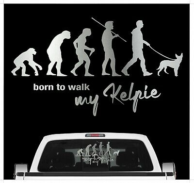Kelpie Australian Barb Evolution Auto Aufkleber Hund Folie Dog Sticker