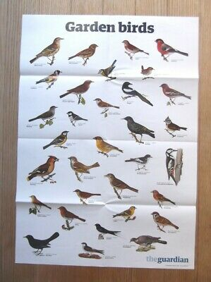 Guardian A1 Wallchart Wall chart Poster Garden Birds Ornithology Birdwatching