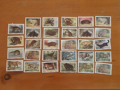 1960s WEETIES trading cards ANIMALS of the WORLD vintage 29 of 64
