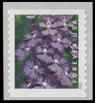 US Wild Orchids Platanthera grandiflora forever coil single MNH 2020