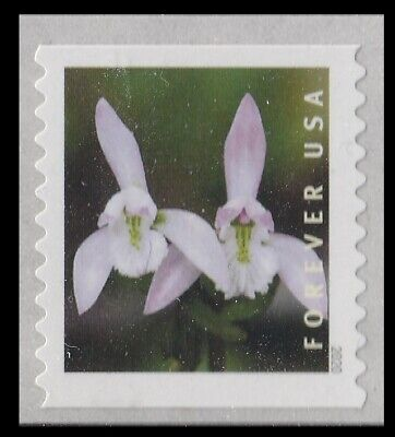 US Wild Orchids 2 Triphora trianthophoros forever coil single MNH 2020