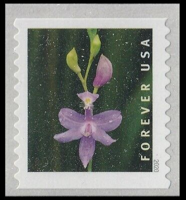 US Wild Orchids Calopogon tuberosus forever coil single MNH 2020