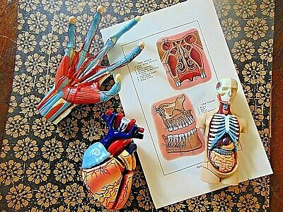 Vintage Medical Models and Book Plate from Antique Medical Book Curiosity Oddity
