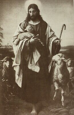 Religious Postcard Jesus Lambs Sheep Shepherd