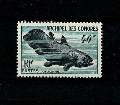 France Colonies - Archipel Des Comores - N°13