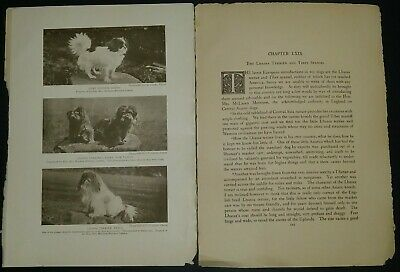 Lhassa Terrier Breed History & Photos from the 1906 Dog Book by James Watson