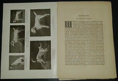 Smooth Fox Terrier Breed History & Photos from the 1906 Dog Book James Watson