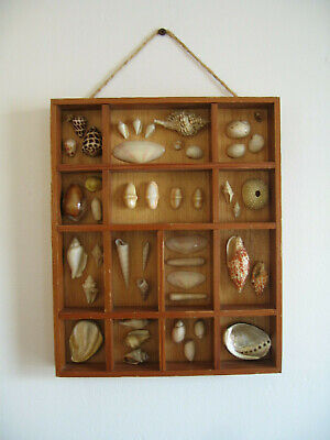 Vintage Seashell Collection Wooden Type Tray Shadow Box Wood Sea Shell Display